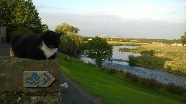Cat's Entertainment: The afore-mentioned black'n'white moggy, enjoying a little peace in the Ribble Valley, but later found inside Ribchester Village Hall (Photo: Malcolm Wyatt)